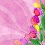 Flowers tulips on pink background Stock Photos