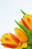 Flowers  tulips  spring   bouquet Royalty Free Stock Photos