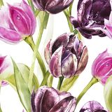 Flowers of Tulips. Watercolor hand drawn botanical illustration of flowers. Seamless pattern. royalty free illustration