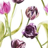Flowers of Tulips. Watercolor hand drawn botanical illustration of flowers. Seamless pattern. Flowers of Tulips. Watercolor hand drawn botanical illustration of stock illustration