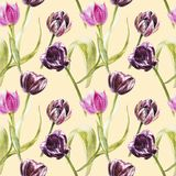 Flowers of Tulips. Watercolor hand drawn botanical illustration of flowers. Seamless pattern. Stock Image
