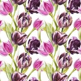 Flowers of Tulips. Watercolor hand drawn botanical illustration of flowers. Seamless pattern. stock illustration