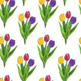 Flowers Tulips Watercolor Seamless Pattern Drawing Digital Paper Illustration Botanical Spring Decorations Greeting Card Design In stock illustration
