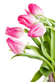 Flowers tulips Stock Photos