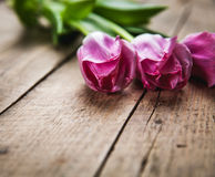 Flowers. tulips on a wooden background with space for text Royalty Free Stock Images