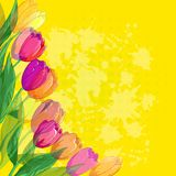 Flowers tulips on yellow background. Tulips flowers and leafs on abstract yellow background. Vector eps10, contains transparencies Royalty Free Stock Photos