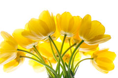 Flowers tulips yellow bouquet isolated on white Royalty Free Stock Images