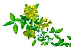 Flowers twig Stock Photo