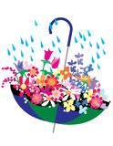 Flowers In Umbrella Royalty Free Stock Photos