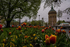 Flowers under Grey Clouds at the Mannheim Water Tower royalty free stock image