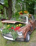 Flowers under the hood of an old car.  Royalty Free Stock Images