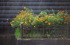 Flowers Under Rain Stock Photography