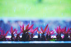 Flowers Under Rain Stock Images
