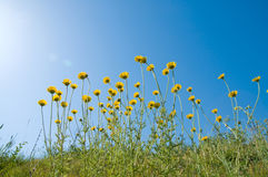 Flowers under sun Royalty Free Stock Photography
