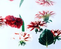 Flowers under water on bright background. stock image