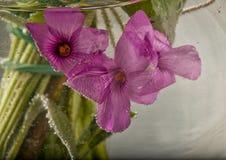Flowers underwater Stock Photography