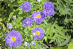 Flowers. Royalty Free Stock Photography