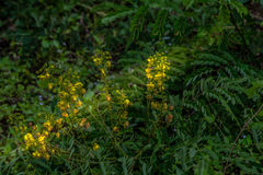 Flowers in upstream. Grass flower grow up on the hill beside the road Royalty Free Stock Image