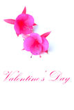 Flowers for Valentine's day. Royalty Free Stock Photos