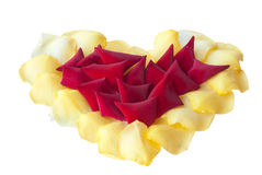 Flowers for Valentine's day. Royalty Free Stock Photography