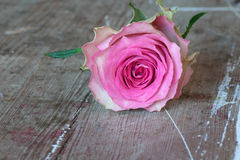 Flowers for valentines or mothers day Stock Image