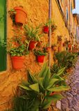 Flowers in Valldemosa on Majorca. Flowerpots on the wall of Valldemossa on Mallorca, Balearic Islands, Spain royalty free stock image