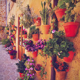 Flowers in Valldemosa on Majorca Stock Photo
