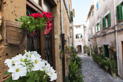 Flowers in Valldemossa Royalty Free Stock Image