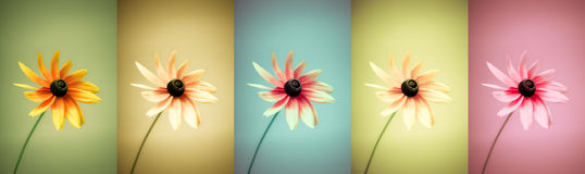 Flowers variation Royalty Free Stock Photos