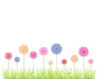 Flowers in various colours Royalty Free Stock Images