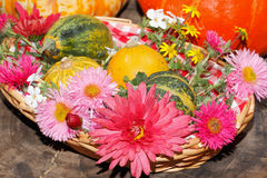Flowers various garden flowers and ornamental gourds in a basket Stock Image