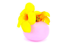 Flowers in vase. Yellow tropical flowers in vase isolated on white background Royalty Free Stock Image