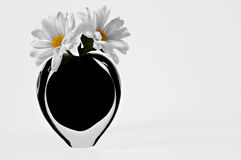Flowers in vase. Daisies in black hearth shaped vase on white background Stock Photo
