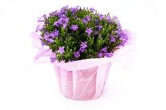 Flowers vase Royalty Free Stock Photography