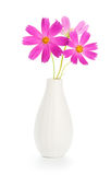Flowers in vase. Beautiful pink flowers in white vase Royalty Free Stock Image