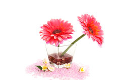 Flowers in vase Royalty Free Stock Image