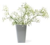 Flowers in vase. Over white background Stock Images