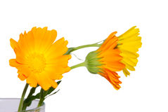Flowers in a vase. Yellow and orange flowers in a vase with water Stock Photos