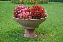 Flowers. Vase back gardens plants Stock Image