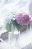 Flowers in vase behind tulle curtain on window Royalty Free Stock Photography