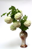 Flowers. A vase with a bouquet of white flowers Royalty Free Stock Photo