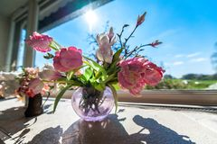Flowers in a vase in front of window with blue sky stock images