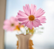 Flowers in vase. Stock Photos