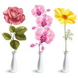 Flowers in vase. Set of beautiful flowers (rose, orchid, daisy) in the vase.  on white background Stock Image