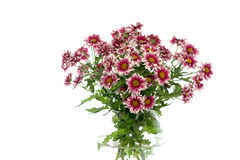 Flowers in a vase on a white background Royalty Free Stock Image