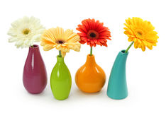 Flowers in vases stock images
