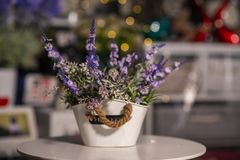 Flowers in vases used for home decoration. On blur background stock photo