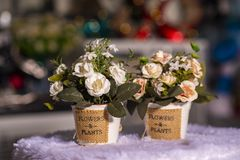 Flowers in vases used for home decoration. On blur background royalty free stock images