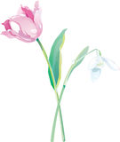 Flowers vector Royalty Free Stock Images