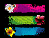 Flowers vector composition Stock Photos